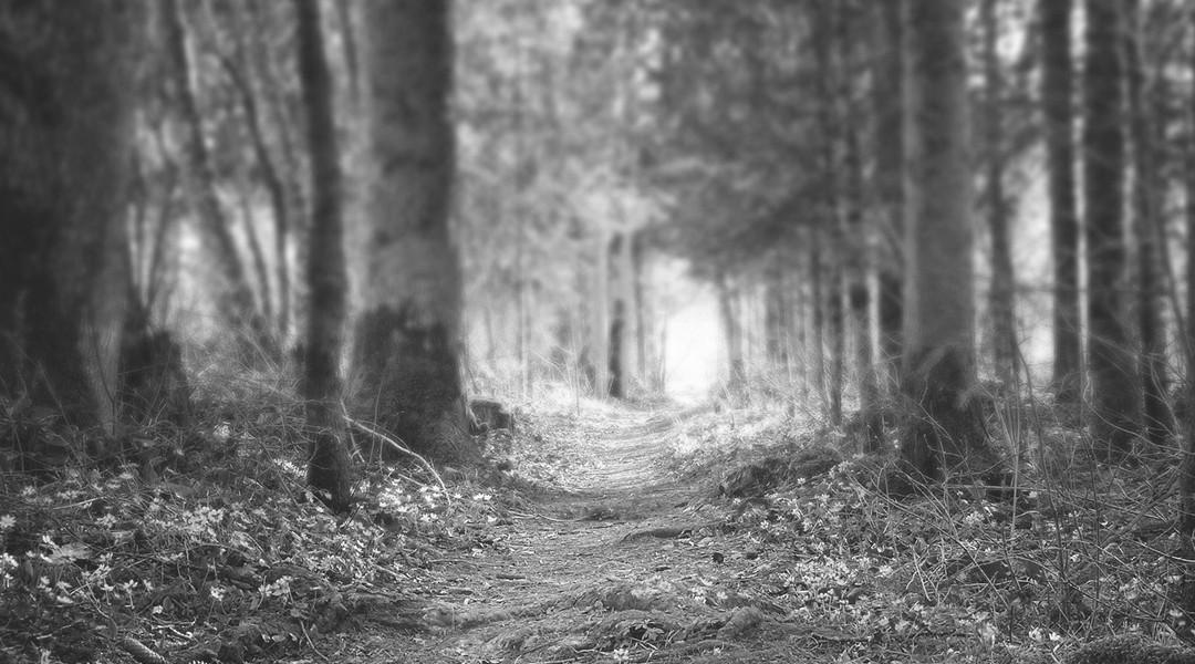 Chemin de foret (noir-blanc)